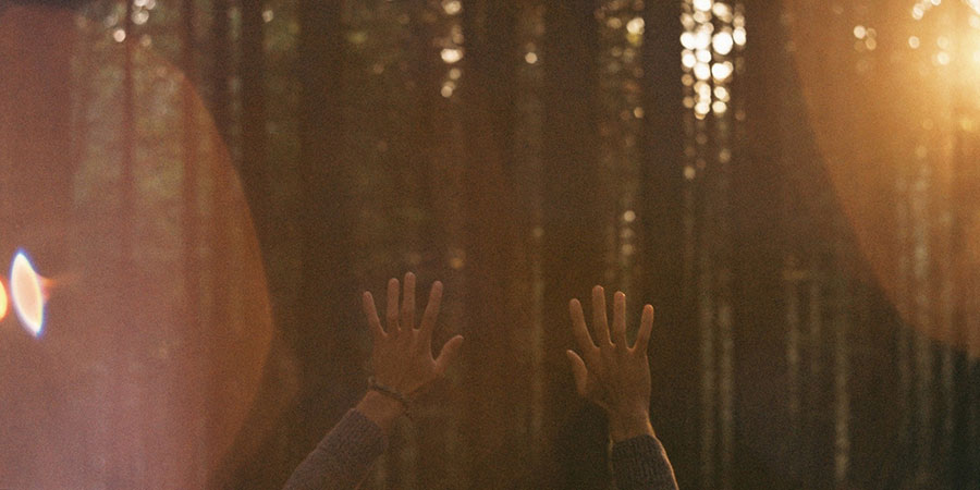 Two hands up, fingers spread on a radiant forest background.